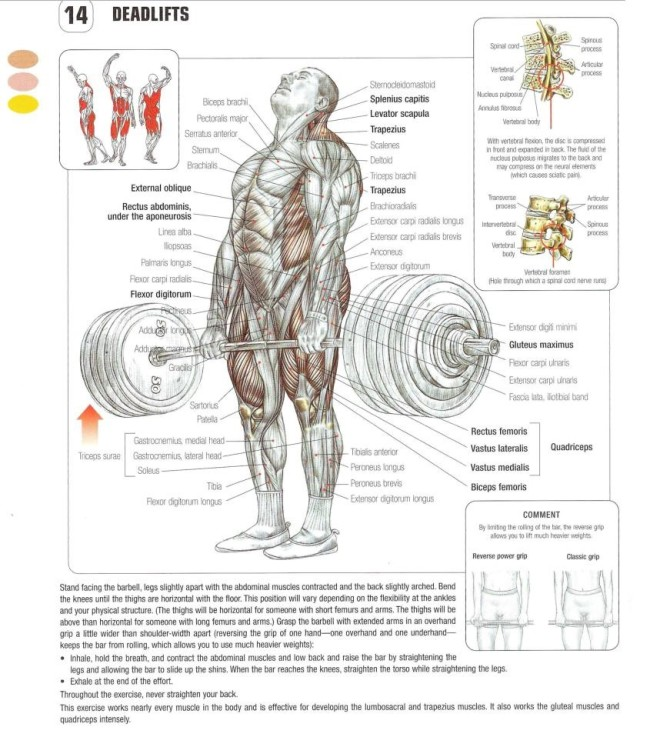 Deadlift front