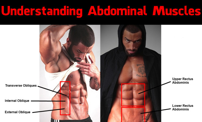 gym flow 100 – understanding abdominal muscles, Human Body