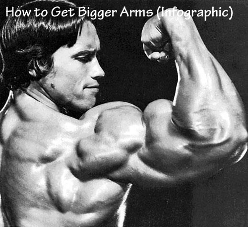 How to Get Bigger Arms (Infographic)